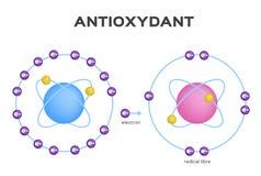Free radical and Antioxidant . Antioxidant donates electron to Free radical . infographic. On white background vector illustration