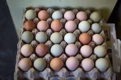 Free range chicken eggs Stock Photos
