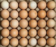 Free range chicken eggs in egg tray. Overhead view of free range organic chicken eggs in tray. Some eggs are dirty stock image