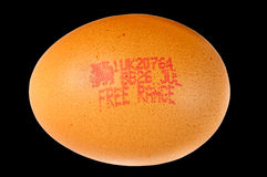 Free range chicken's egg. Stock Image