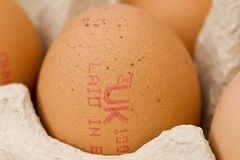 Free Range Egg Stock Photo