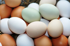 Free-range eggs Stock Images