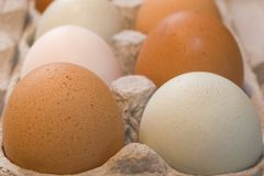 Free Range Eggs. Colored free range eggs -- speckled brown, blue-grey, white -- in a environmentally friendly cardboard carton Royalty Free Stock Photos