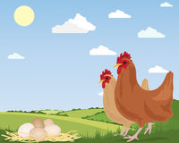 Free range eggs. An illustration of two free range chickens with newly laid eggs on straw and scenic countryside under a blue summer sky Royalty Free Stock Photos