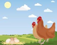 Free range eggs Royalty Free Stock Photos