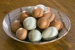 Free range eggs in a bowl. Fresh free range duck and chicken eggs in a dish in morning sunlight. Shallow depth of field Royalty Free Stock Images