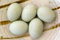 Free range eggs. Five fresh free range duck eggs in a bowl. Shallow depth of field Royalty Free Stock Photo