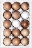 15 Free Range Eggs. In a cardboard egg box Royalty Free Stock Photo