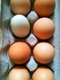 Free range eggs. Organic farm fresh free range eggs Royalty Free Stock Image
