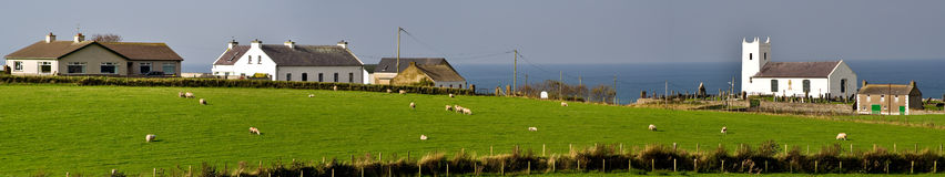 Free range farming. With livstock by the coast stock images