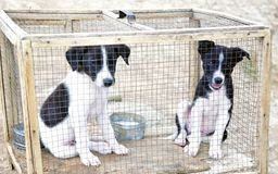 Free Range Urban Puppies in a Cage! stock photography