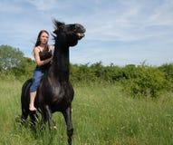 Free rearing horse Stock Image