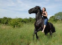 Free rearing stallion Stock Photo