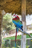 Free red macaw parrot sitting on a tree in the park. Red and blue macaw parrot sitting on a tree in the zoo in Marineland ,Spain Stock Photography