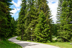 Free Road among Beautiful Forest in the National Park Durmitor, Stock Images