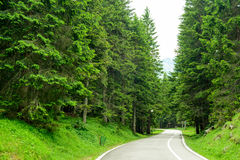 Free Road among Beautiful Forest in the National Park Durmitor, Montenegro Stock Image