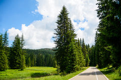 Free Road among Beautiful Forest in the National Park Durmitor, Montenegro Royalty Free Stock Image