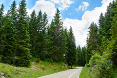 Free Road among Beautiful Forest in the National Park Durmitor, Montenegro Stock Photography