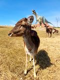 Free-roaming deer in dinosaur park with volcano royalty free stock photos
