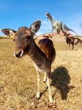 Free-roaming deer in dinosaur park with volcano stock image