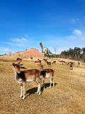 Free-roaming deer in dinosaur park with volcano stock photos