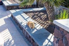Free-running γάτα Στοκ φωτογραφία με δικαίωμα ελεύθερης χρήσης