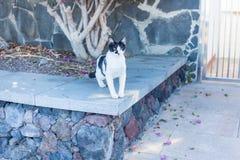 Free-running γάτα Στοκ Φωτογραφίες