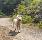 A Free Running Dog stock image