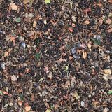 free seamless texture autumn leaves Royalty Free Stock Images