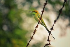 Free stock photo of animal, avian, barb, wires Stock Photography
