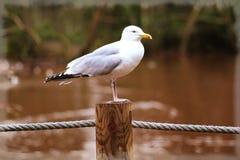 Free stock photo of animal, , avian, beak Stock Photography