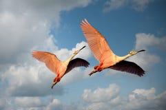 Free stock photo of animals, avian, beaks, birds Stock Photos
