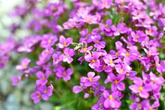 Free stock photo of beautiful, flowers, bee, bloom Royalty Free Stock Photos