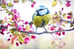 Free stock photo of bird, flower, branch, fauna Stock Photography