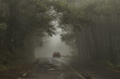 Free stock photo of bosque, car, car, lights Royalty Free Stock Images