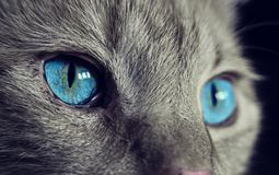 Free stock photo of cat, blue, whiskers, face Stock Photos