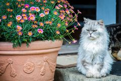 Free stock photo of cat, flower, small to medium sized cats, plant Stock Photos