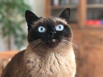 Free stock photo of cat, whiskers, small to medium sized cats, cat like mammal Stock Photo