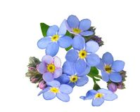 Free stock photo of flower, blue, flowering plant, violet Royalty Free Stock Image