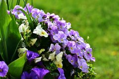 Free stock photo of flower, plant, purple, violet family Royalty Free Stock Photography