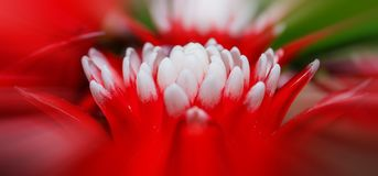 Free stock photo of flower, red, flora, macro photography Stock Photos
