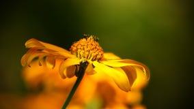 Free stock photo of flower, yellow, nectar, close up Stock Photos