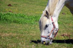 Free stock photo of horse, grass, pasture, grassland Royalty Free Stock Photo