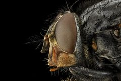 Free stock photo of insect, invertebrate, macro photography, close up Royalty Free Stock Photo