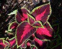 Free stock photo of leaf, flora, plant, petal Stock Photos