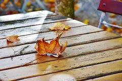 Free stock photo of leaf, wood, autumn Royalty Free Stock Photo