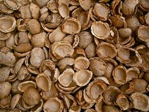 Free stock photo of nuts & seeds, clam, nut, commodity Stock Images