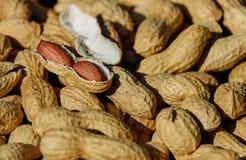 Free stock photo of peanut, nut, produce, tree nuts Stock Image