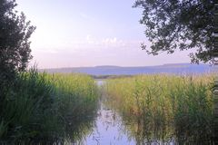 Free stock photo of sky, wetland, nature reserve, water Royalty Free Stock Image