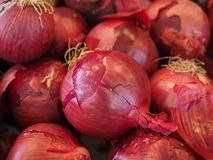Free stock photo of vegetable, onion, local food, red onion Stock Photography